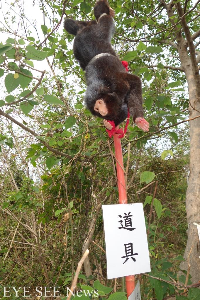 中山大學假猴道具