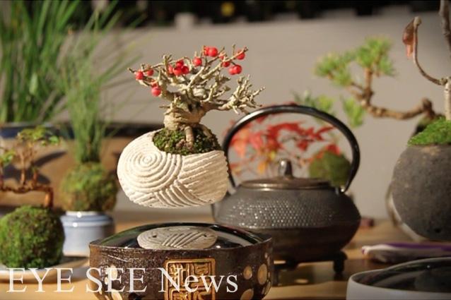 漂浮盆栽Air Bonsai  圖/Kickstarter