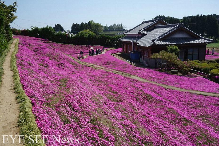 Kuroki夫婦的花園。圖/每日郵報