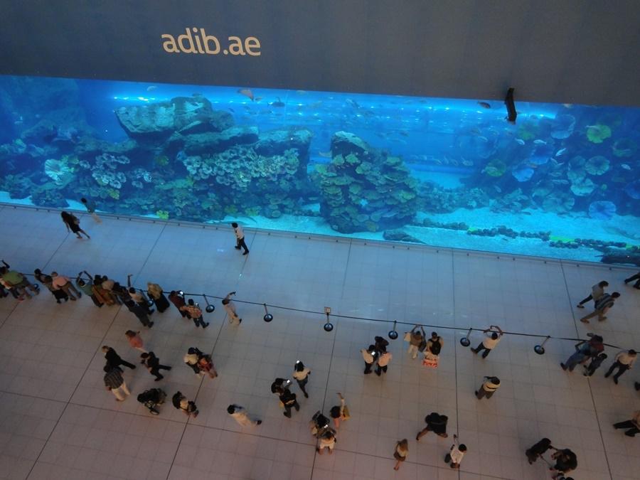 Dubal Mall內就有超大型水族館可免費觀賞,成為觀光客必訪之地。攝/林智恩