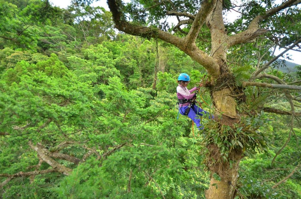 攀樹師繫著繩索,在林間飛躍。圖為學習攀樹的學員。 圖/攀樹趣粉絲團